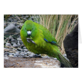 Antipodes Island Parakeet Greeting Card