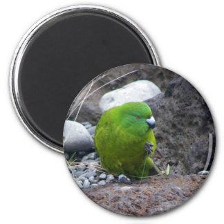 Antipodes Island Parakeet Refrigerator Magnets