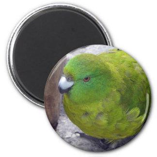 Antipodes Island Parakeet Fridge Magnet