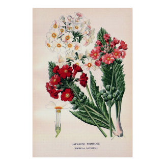Antique 19th century color flowers litho poster