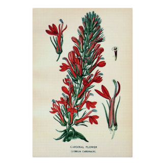 Antique 19th century color flowers litho posters