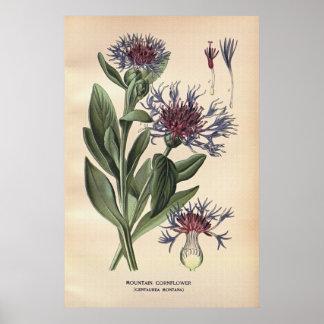 Antique 19th century color flowers litho print