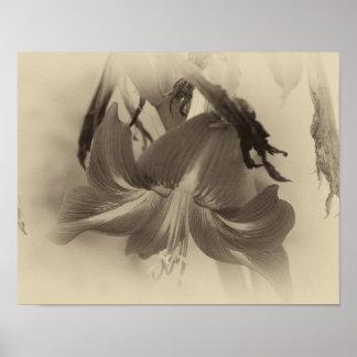 Antique Amaryllis Flower - Beautiful Nature Photo Poster