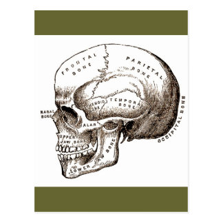 Antique Anatomy Anatomical Skull Post Cards