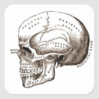 Antique Anatomy Anatomical Skull Stickers
