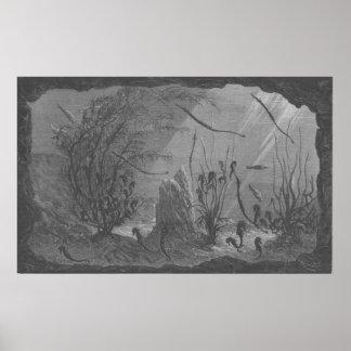 Antique aquarium print seahorses fishes