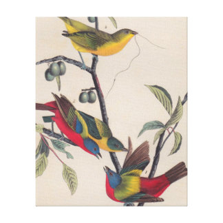 Antique Audubon Painted Bunting Bird Canvas Print