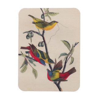 Antique Audubon Painted Bunting Bird Magnet