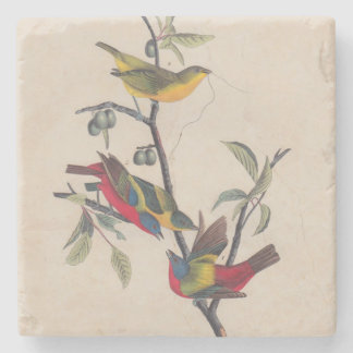 Antique Audubon Painted Bunting Bird Stone Coaster