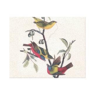 Antique Audubon Painted Bunting Canvas Print