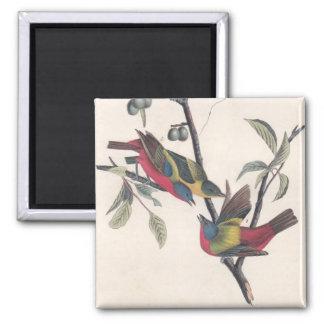 Antique Audubon Painted Bunting Magnet