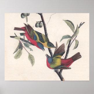 Antique Audubon Painted Bunting Poster