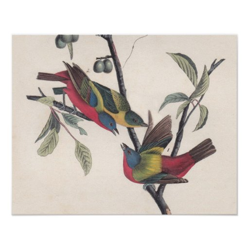 Antique Audubon Painted Bunting Poster