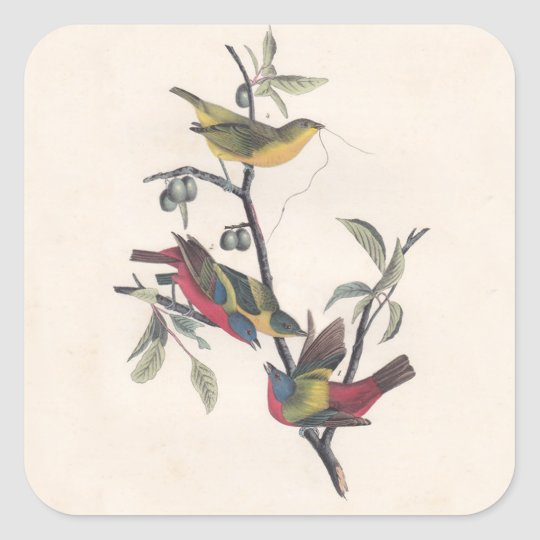 Antique Audubon Painted Bunting Square Sticker