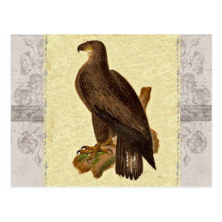 Antique Bald Eagle Natural History J.W. Hill Print Postcard