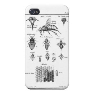 Antique Bees & Honeycomb iPhone 4/4S Cases