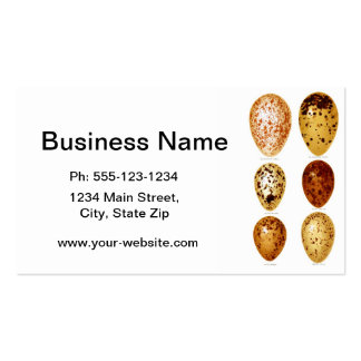 Antique Bird Eggs Print no.12 Easter Spring Decor Double-Sided Standard Business Cards (Pack Of 100)