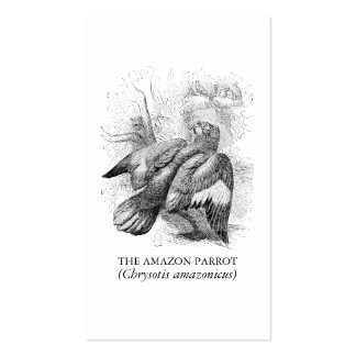 Antique Bird Engraving Cassell Amazon Parrot Double-Sided Standard Business Cards (Pack Of 100)