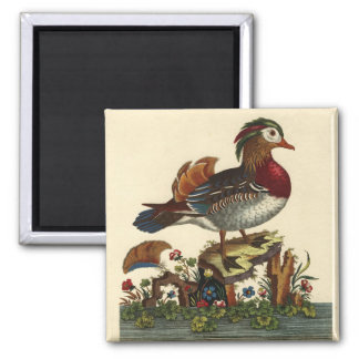 antique bird engraving magnet