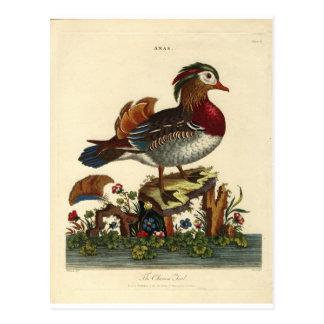 antique bird engraving postcard
