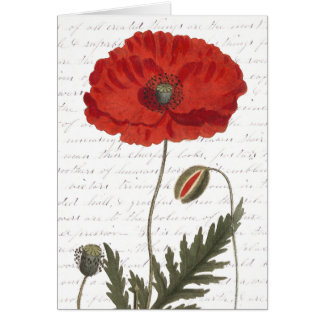 Antique Botanical Illustration Bright Red Poppy Greeting Card