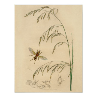 Antique Botanical Insect Print