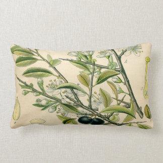 Antique Botanical Print Blackthorn Floral Drawing Lumbar Pillow