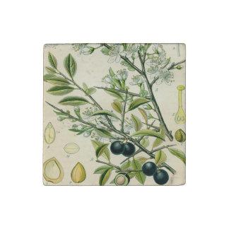 Antique Botanical Print Blackthorn Floral Drawing Stone Magnet