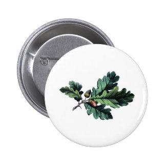 Antique Botanical Print Oak Leaves & Acorns 2 Inch Round Button