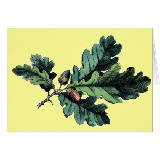 Antique Botanical Print Oak Leaves & Acorns Card