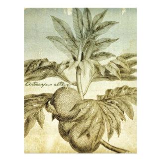 Antique Breadfruit Artocarpus Altilis Letterhead