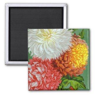 Antique Chrysanthemum Varieties Magnet