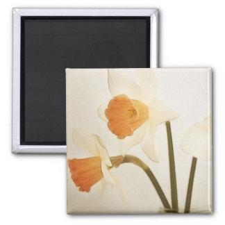 Antique Daffodils Fridge Magnets