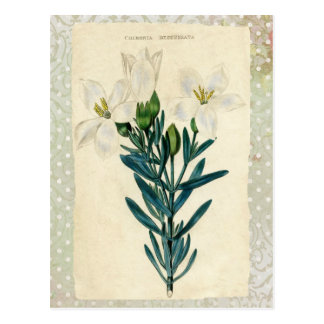 Antique Easter Lily Post Cards