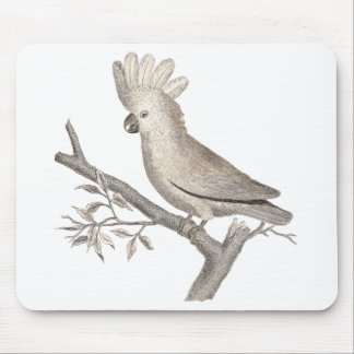 Antique Engraving of a Cockatoo Histoire Naturelle Mouse Pad