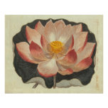 Antique Engraving of Water Lily, Lotus Blossom Poster