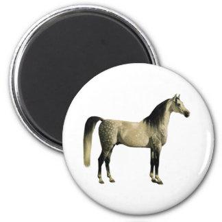 Antique Horses - Arabian Fridge Magnet