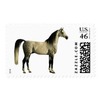 Antique Horses - Arabian Stamp