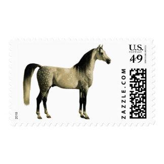 Antique Horses - Arabian Postage Stamp