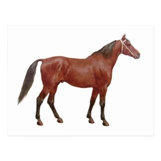 Antique Horses - Thoroughbred Postcard