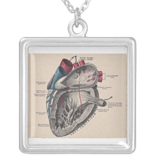 Antique human heart anatomy diagram silver plated necklace