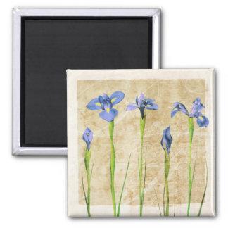 Antique Irises - Vintage Iris Background Customize 2 Inch Square Magnet