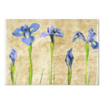 Antique Irises - Vintage Iris Background Customize Card