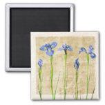 Antique Irises - Vintage Iris Background Customize Refrigerator Magnet