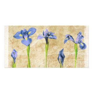 Antique Irises - Vintage Iris Background Customize Photo Greeting Card