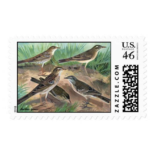 Antique litho, Anthus genus (pipits) summer-fall Stamp