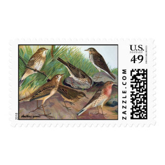 Antique Litho, Anthus genus (pipits) summer Postage Stamps