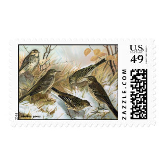 Antique litho, Anthus genus (pipits) winter Postage Stamps
