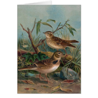 Antique Litho, Calandra Lark and Woodlark Card