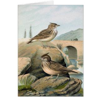 Antique Litho, Crested lark and Thekla lark Card